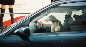Hot Cars Are Deadly for Dogs