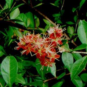 Henna Flower Plant | makedes.com