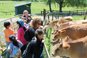 Meeting the animals with Kathy
