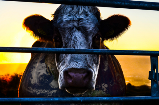 Film Review: Cowspiracy