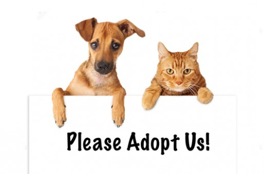 Why should you adopt animals and not buy them?
