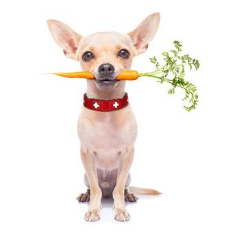 Commercial Pet Food Dangers