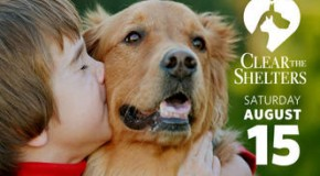 Clear The Shelters Event- Adopt Your New Best Friend