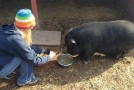 Creating the Loveland Farm Sanctuary