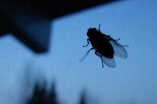 What I Learned from a Housefly