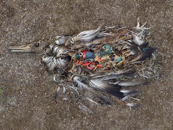 Chris-Jordan-The-Plastic-Tragedy-at-Midway