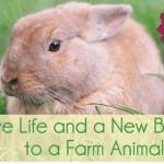 Skip the Fluffy Chicks. This Easter, Help an Animal in Need