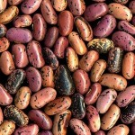 Ask Grettie – Vegans and Protein