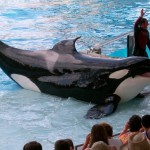 LES ANIMAUX – PETA vs. SeaWorld