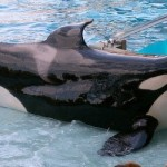 UPDATE – PETA vs. SeaWorld