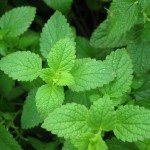 Herbal Remedies: Peppermint