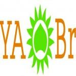 Product Review: Surya Brasil