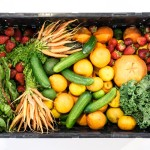 Veganizing your life and home