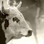 Ruthless Rodeo Animal Cruelty