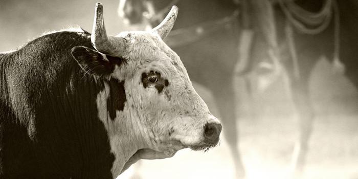 Ruthless Rodeo Animal Cruelty Chic Vegan