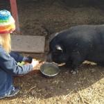 Loveland Farm Sanctuary
