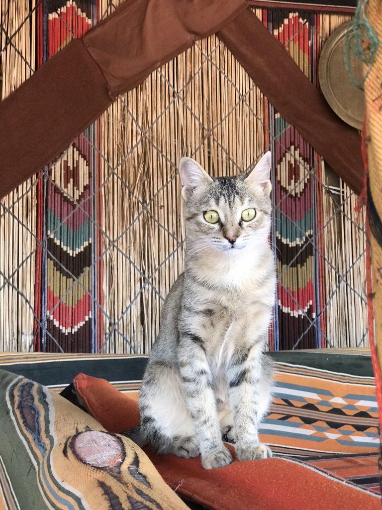 Cats of Jordan
